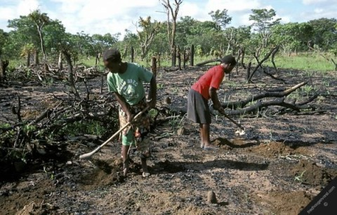 africa agriculture land horizontal zambia environment subsistence farming children working their field after burning trees vegetation