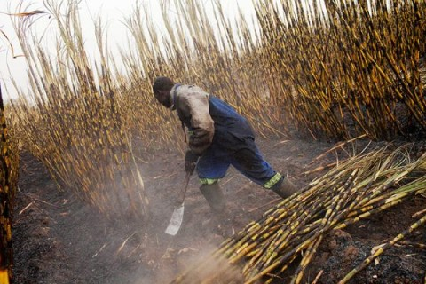 Zambia Sugar Plc