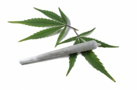 cannabis dobo ifyamba ulubangula