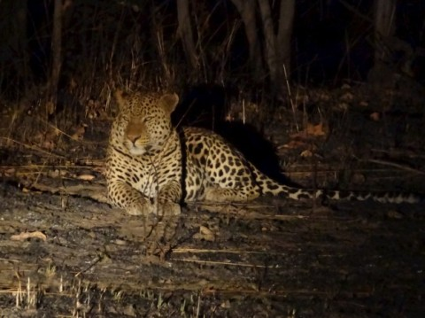 Leopard in National Park