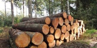 Zambia's commercial timber stocks equal 340,1 million cubic meters, more than half of which grows in the three provinces targeted by the CIFOR-led research, according to Food and Agriculture Organisation estimates