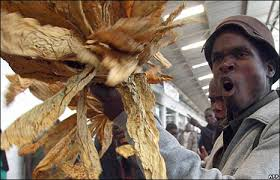 Chipata Farmers Unhappy with Tobacco Price