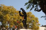 On December 31 1963, Zanco was ordered to break the symbolic shackles or get shot. Pic by Chibamba Kayula.