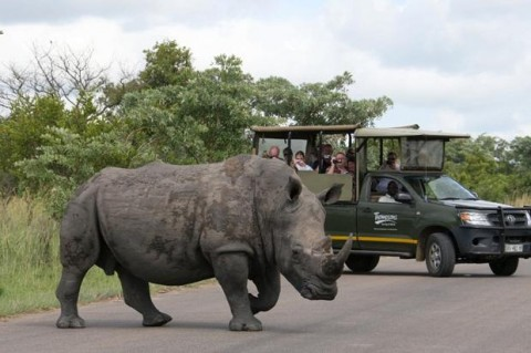 Rhino, Tristan McConnell Nairobi