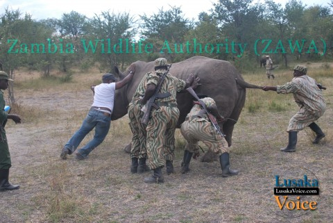 Zambia Wildlife Authority ZAWA