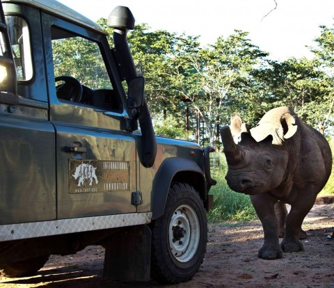 Zambezi National Park, the southern reaches of Zambia, and the Chobe National Park.