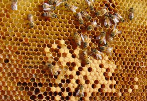 zambia_trade honey