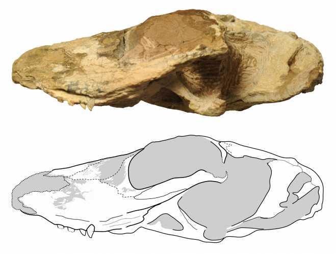 Ichibengops munyamadziensis