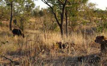 Wildlife Trafficking - Photo credit -poachingfacts.com