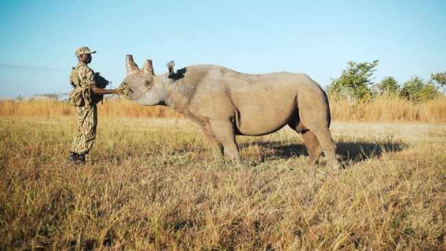 conservation of Zambia's Black Rhinos