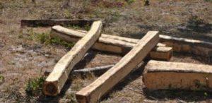 timber Mongu