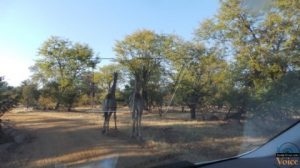 Musi-o-tunya national park -  Livingstone, Zambia  July 2013 Pre-UNWTO  in Pictures