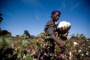 Fairtrade cotton farmers