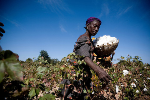 Fairtrade cotton farmers