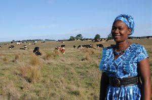 Zambian woman learns about dairy farming