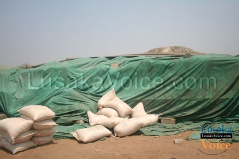 Hunger is reportedly rooming in Sioma and Shangombo district of Western Province. While a 25kg bag of breakfast Millie Meal is costing K150, the food reserve agency has in store a total of 25, 176 X 50kg of maize lying idle in its Nangweshi shed.