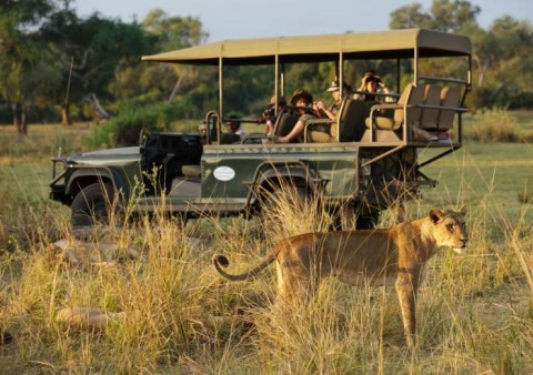 African Safari | Mfuwe Lodge