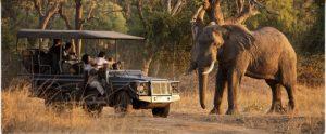 African Safari   Mfuwe Lodge