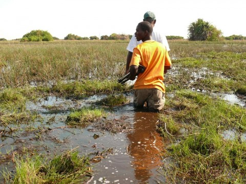 Bangweulu Swamps