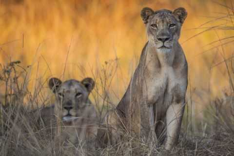 Local children live next to a game park but many have never seen a lion, giraffe or impala. (Photograph by Marcus and Kate Westberg)
