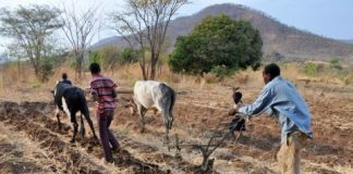 Conservation Farming in Zambia