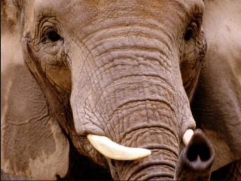 Elephant lusakavoice.com 2014-05-20 at 11.49.17 PM