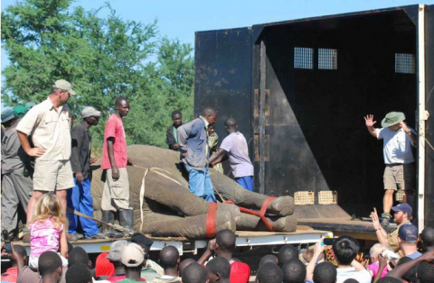 Male Elephant Successfully Relocated to Kafue National Park