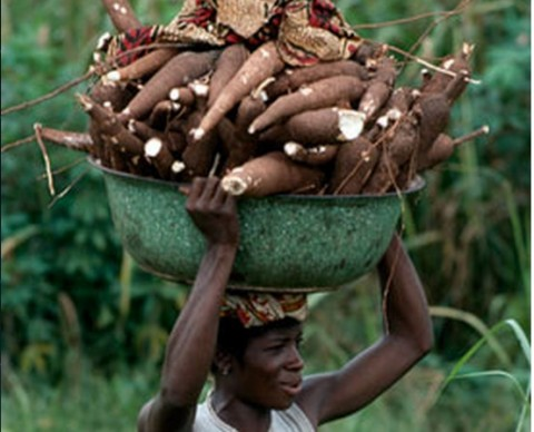 cassava - lusakavoice.com