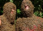 Annual Bee Beard Competition in Canada