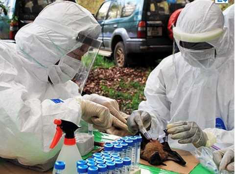 Researchers from Hokkaido University examine a wild bat for viruses in Zambia in 2012. (Provided by Hokkaido University Research Center for Zoonosis Control)
