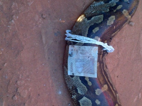 two-metre dead python was found outside their house at Kabwe's Chowa Police Camp