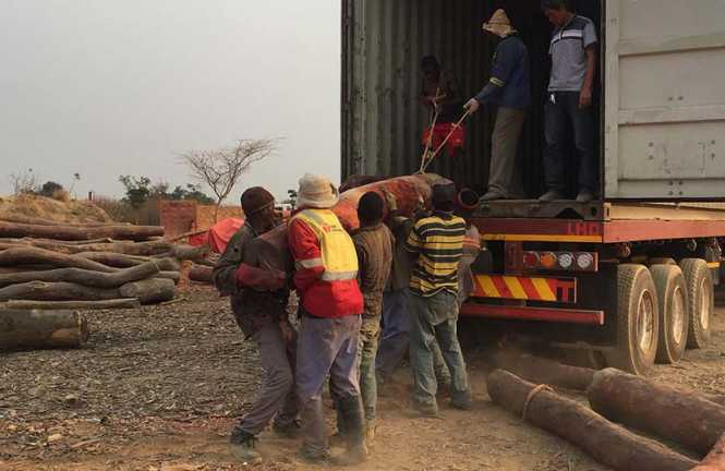 Workers from a bloodwood warehouse operated by Chinese businessmen lift a wood into a truck in Lubumbashi, Congo, Aug. 22, 2016. Shi Yi/Sixth Tone